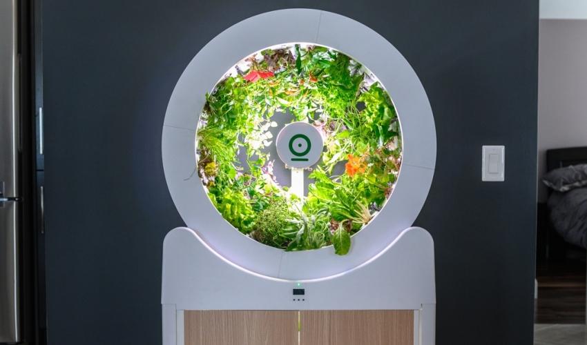 """Bất ngờ với """"vườn"""" rau nhỏ xinh, tiện ích ngay trong phòng khách - Ảnh 1."""