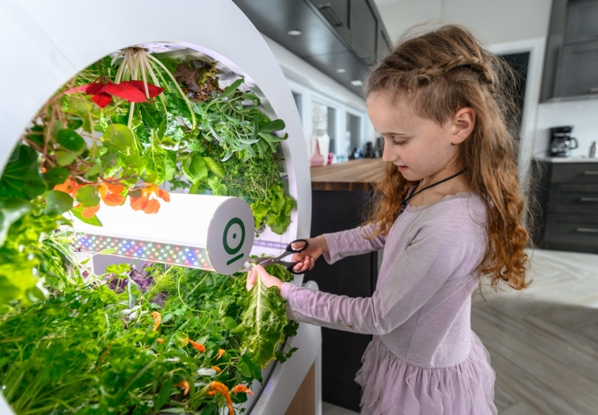 """Bất ngờ với """"vườn"""" rau nhỏ xinh, tiện ích ngay trong phòng khách - Ảnh 5."""