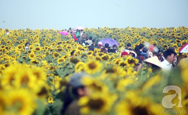 Các thiếu nữ hào hứng khoe sắc xinh đẹp cùng cánh đồng hoa hướng dương rực rỡ - Ảnh 14.