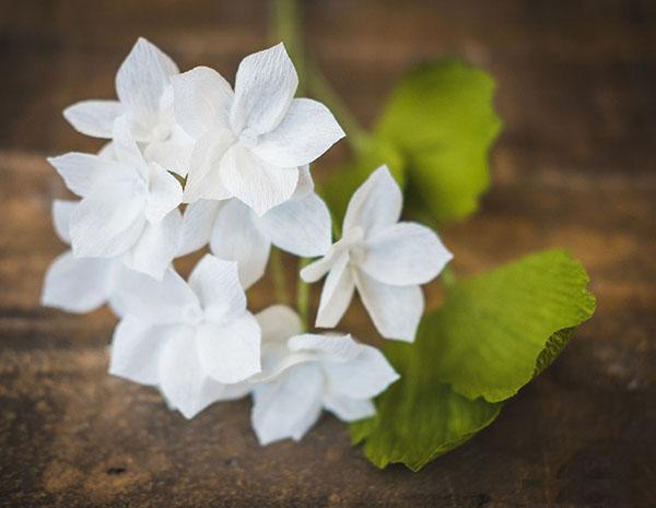 3 cách làm hoa giấy sắc trắng tinh khôi trang trí nhà đẹp tinh tế - Ảnh 2.