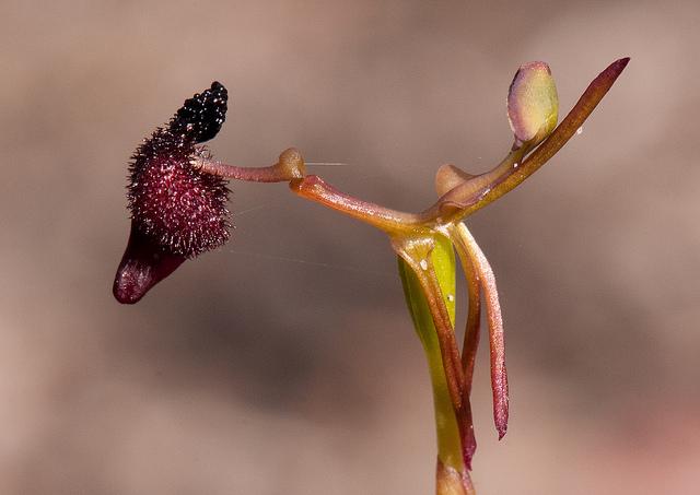 Những loài thực vật kỳ lạ và đáng sợ nhất thế giới - Ảnh 4.