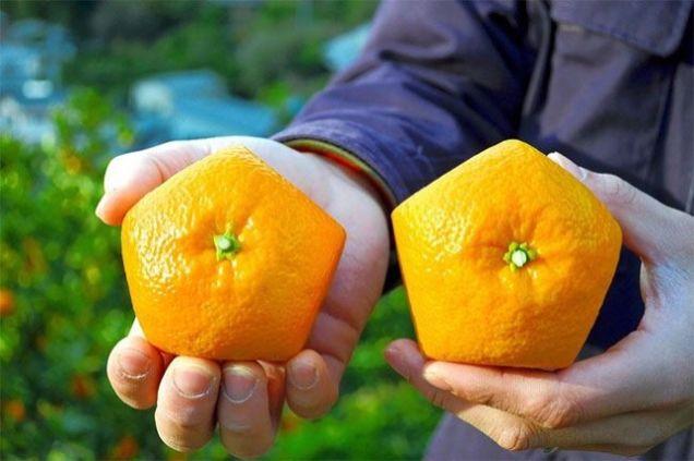 Quên dưa hấu vuông đi, Nhật Bản còn có loại cam ngũ giác thế này đây - Ảnh 1.