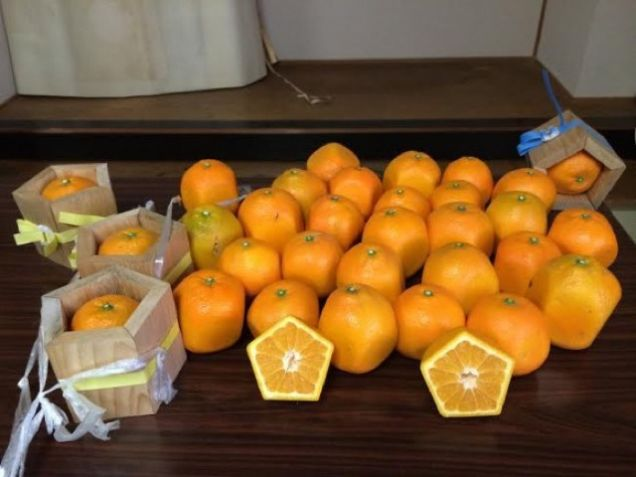 Quên dưa hấu vuông đi, Nhật Bản còn có loại cam ngũ giác thế này đây - Ảnh 5.