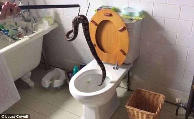 Mở nắp bồn cầu trong nhà vệ sinh, cậu bé 5 tuổi la toáng lên vì cảnh tượng kinh hoàng - Ảnh 2.