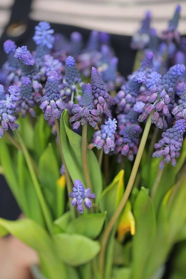 Ngắm loạt hoa nhập khẩu độc, đẹp khiến quý ông không tiếc tiền chi hẳn trăm triệu tặng vợ dịp 8/3 - Ảnh 19.