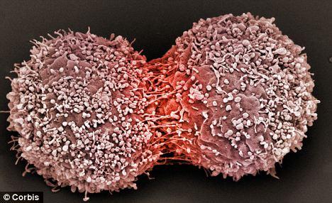 Khoa học nghiên cứu: Bàn tay chồng có thể giúp vợ giảm nguy cơ ung thư vú? - Ảnh 1.