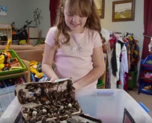 Kinh ngạc bé gái 8 tuổi nuôi hàng nghìn con gián làm thú cưng - Ảnh 2.