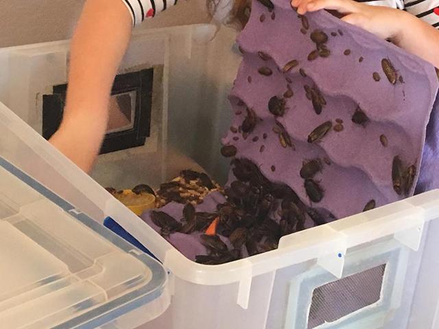 Kinh ngạc bé gái 8 tuổi nuôi hàng nghìn con gián làm thú cưng - Ảnh 7.