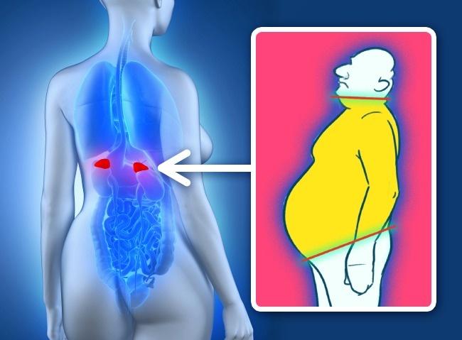 4 lí do gây tăng cân, tích mỡ đầy người mà không phải ai cũng biết - Ảnh 1.