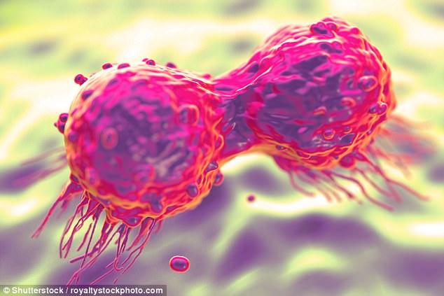 Các nhà khoa học phát hiện chế độ ăn kiêng dành cho bệnh nhân ung thư giúp kéo dài sự sống - Ảnh 2.