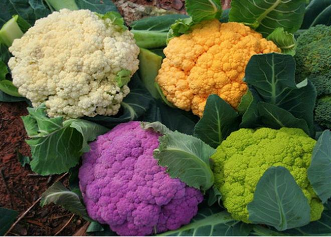 Giáo sư dinh dưỡng chia sẻ cách biến 10 thực phẩm thông thường thành vị thuốc quý - Ảnh 3.