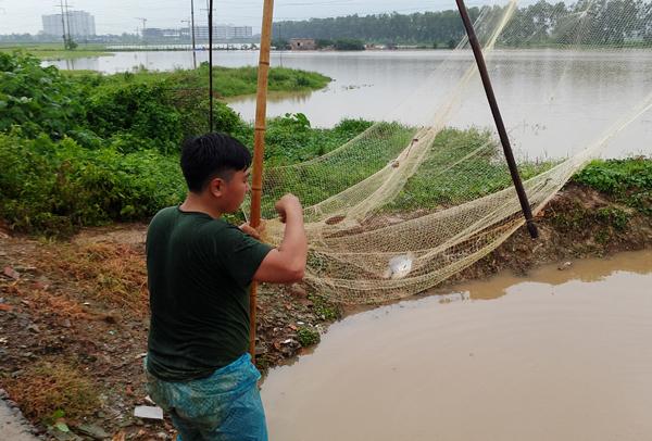 Sau mưa bão, người Hà Nội cất vó đánh cá cạnh các Khu đô thị mới - Ảnh 12.