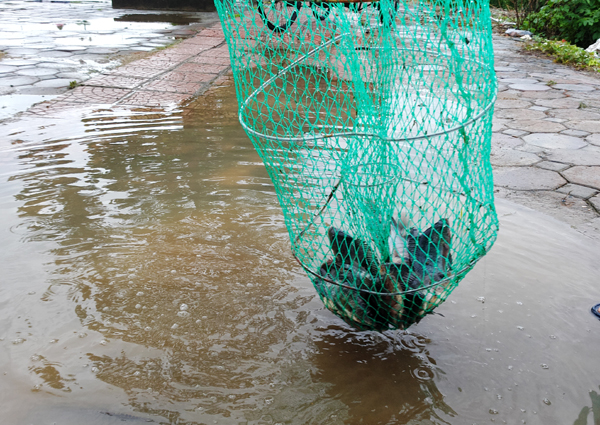 Sau mưa bão, người Hà Nội cất vó đánh cá cạnh các Khu đô thị mới - Ảnh 6.