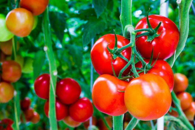 Hóa ra những trái cây chúng ta ăn thường ngày lại ẩn chứa nhiều điều thú vị - Ảnh 3.