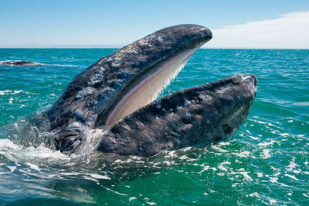 Hình ảnh cực lạ, cá voi khổng lồ ngoi lên mặt nước để được du khách vuốt ve - Ảnh 5.