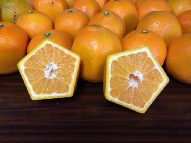 Quên dưa hấu vuông đi, Nhật Bản còn có loại cam ngũ giác thế này đây - Ảnh 6.