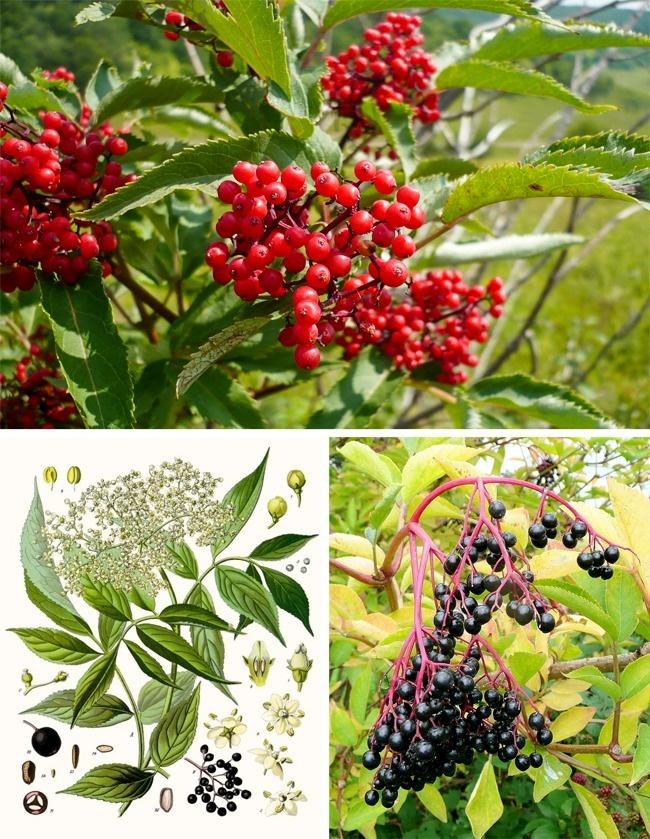 Đừng dại động vào những loài cây này vì chúng đẹp nhưng độc không tưởng - Ảnh 3.