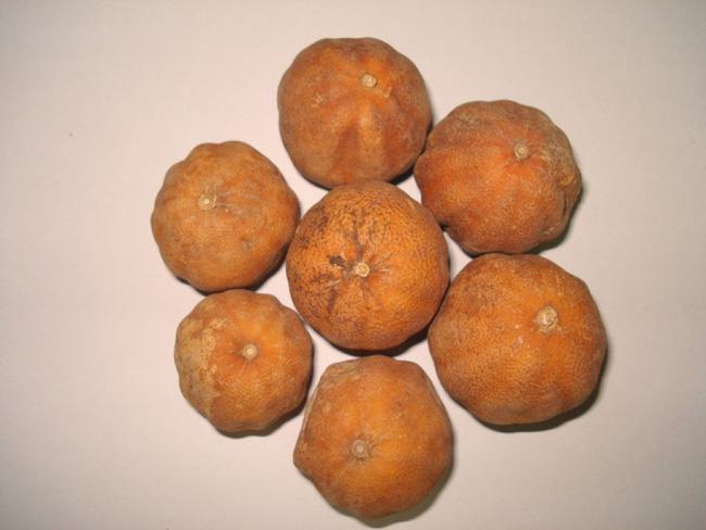 Từ khi biết cách, tôi chẳng còn phải vứt mấy quả chanh bổ đôi còn thừa nữa, chanh không héo ủng mà cực tươi - Ảnh 1.
