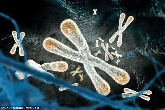 Công nghệ đột phá này sẽ làm trẻ hóa các tế bào già nua, giúp con người chống lại lão hóa - Ảnh 2.