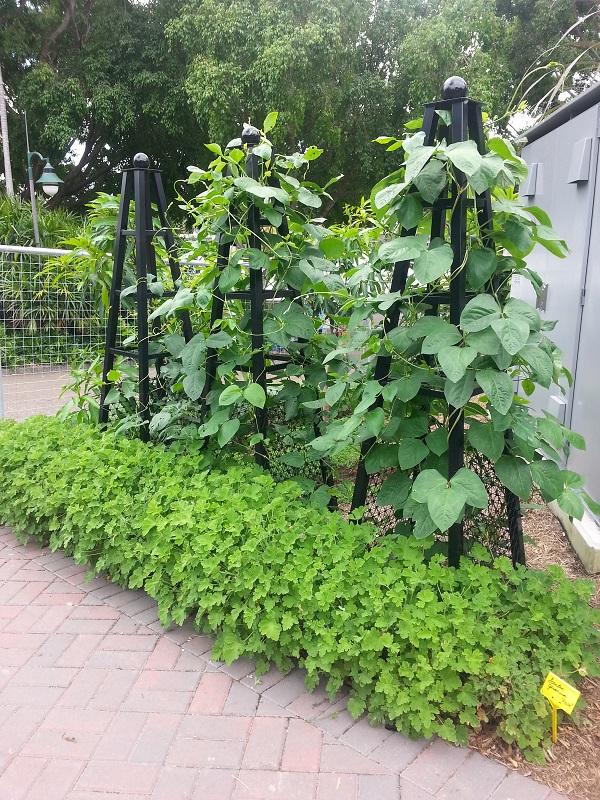 Có một công viên tràn ngập rau xanh và rau ở đây được phát hoàn toàn miễn phí - Ảnh 15.