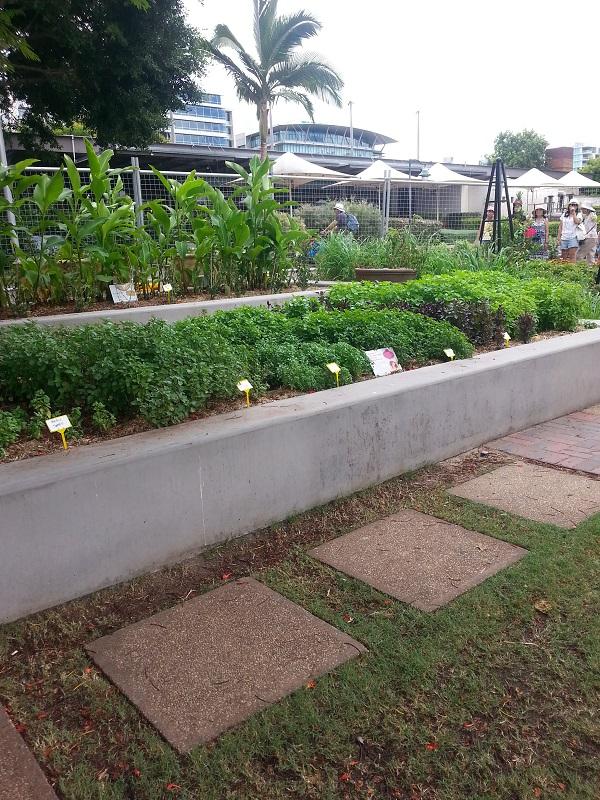 Có một công viên tràn ngập rau xanh và rau ở đây được phát hoàn toàn miễn phí - Ảnh 2.