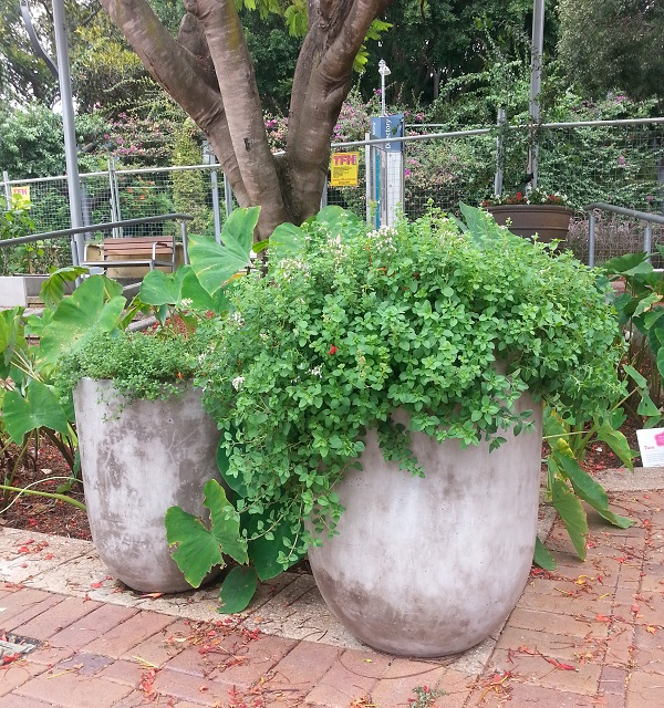 Có một công viên tràn ngập rau xanh và rau ở đây được phát hoàn toàn miễn phí - Ảnh 11.