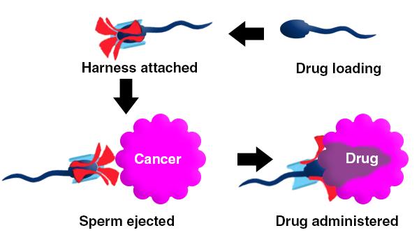 Phát hiện mới: Sử dụng tinh trùng để điều trị bệnh ung thư ở nữ giới - Ảnh 1.