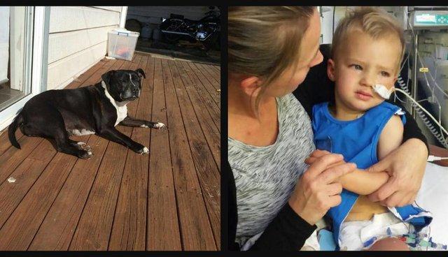 Sủa điên cuồng để thu hút sự chú ý, chó cưng lập công khi giúp chủ cứu sống con trai trong gang tấc - Ảnh 2.
