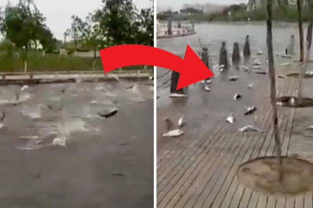Chuyện lạ chưa từng thấy: Hàng trăm con cá đồng loạt nhảy lên bờ tự sát - Ảnh 2.