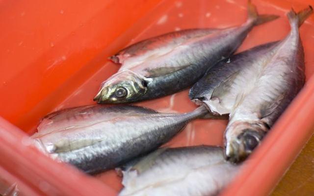 Cá mua về chưa dùng ngay thì phải nhớ những mẹo của ông bà xưa để cá tươi roi rói - Ảnh 2.