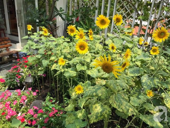 Khu vườn trên sân thượng rộng tới 200m² bạt ngàn rau quả sạch của nữ doanh nhân Sài Thành - Ảnh 20.