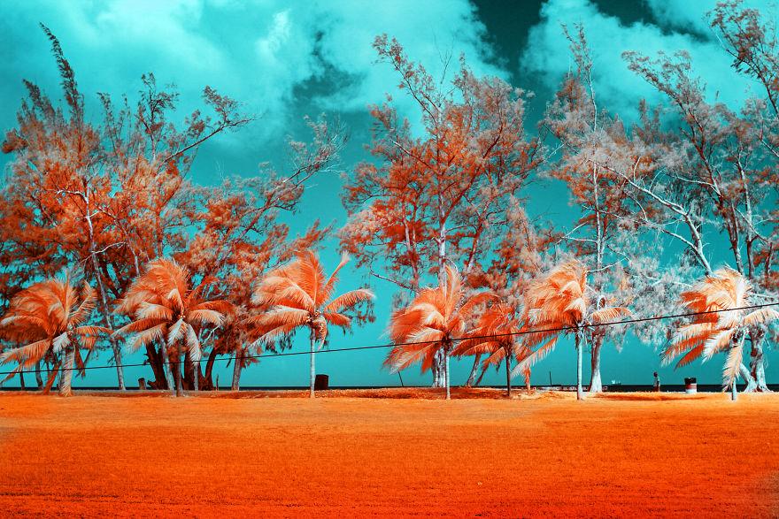 Nếu Thế Giới Chỉ Có 2 Màu Thì Cảnh Vật Vẫn đẹp Lung Linh