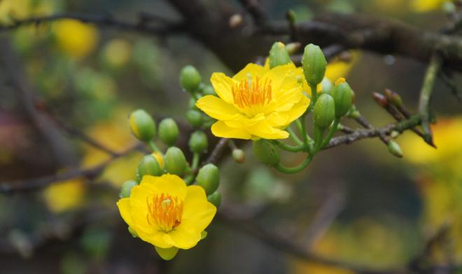Muốn lộc vào nhà ào ào trong năm mới cứ chưng những hoa này trên bàn thờ - Ảnh 2.