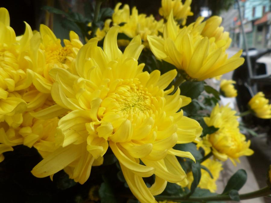 Muốn lộc vào nhà ào ào trong năm mới cứ chưng những hoa này trên bàn thờ - Ảnh 3.