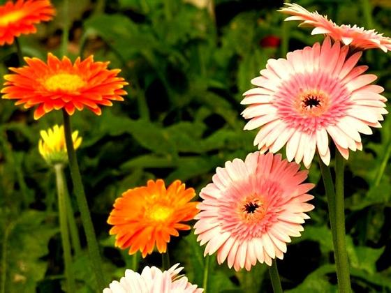 Muốn lộc vào nhà ào ào trong năm mới cứ chưng những hoa này trên bàn thờ - Ảnh 6.