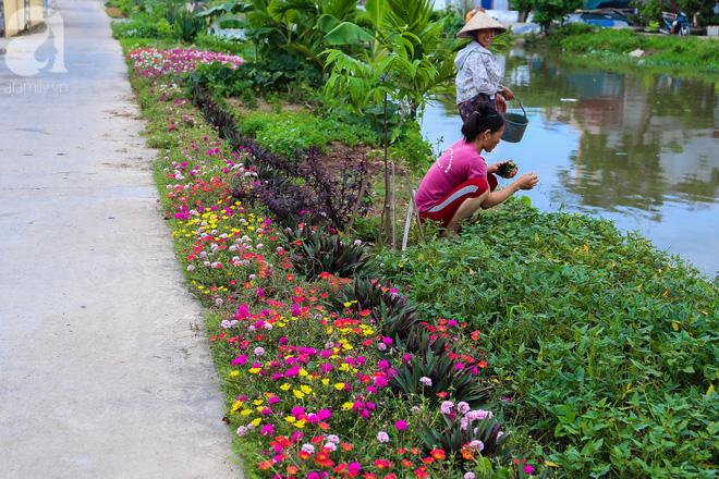 Đẹp ngỡ ngàng những con đường làng rực rỡ màu hoa - Ảnh 14.