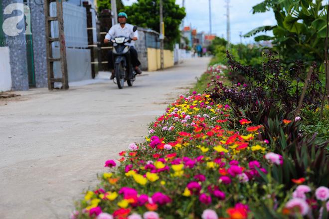 Đẹp ngỡ ngàng những con đường làng rực rỡ màu hoa - Ảnh 16.