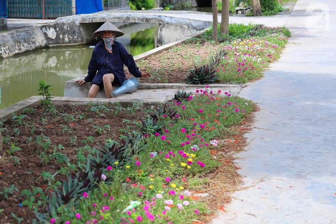 Đẹp ngỡ ngàng những con đường làng rực rỡ màu hoa - Ảnh 15.