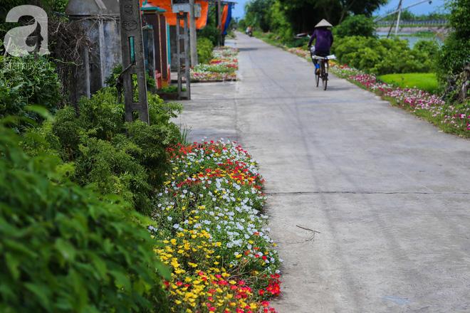 Đẹp ngỡ ngàng những con đường làng rực rỡ màu hoa - Ảnh 21.