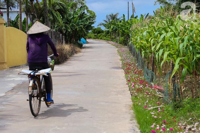 Đẹp ngỡ ngàng những con đường làng rực rỡ màu hoa - Ảnh 20.