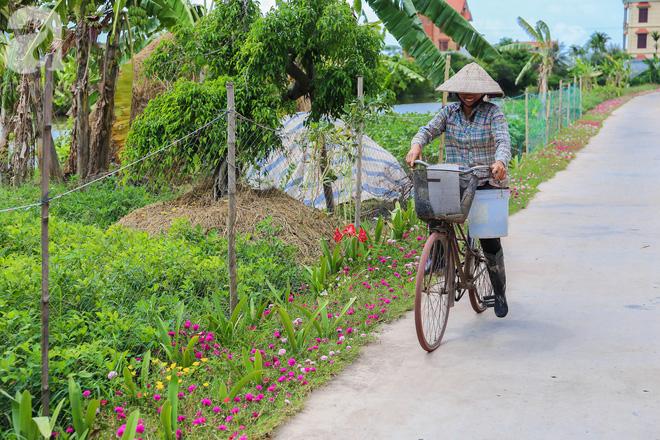 Đẹp ngỡ ngàng những con đường làng rực rỡ màu hoa - Ảnh 11.