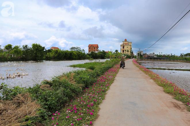 Đẹp ngỡ ngàng những con đường làng rực rỡ màu hoa - Ảnh 10.