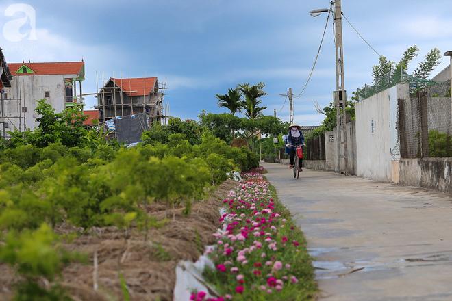 Đẹp ngỡ ngàng những con đường làng rực rỡ màu hoa - Ảnh 9.