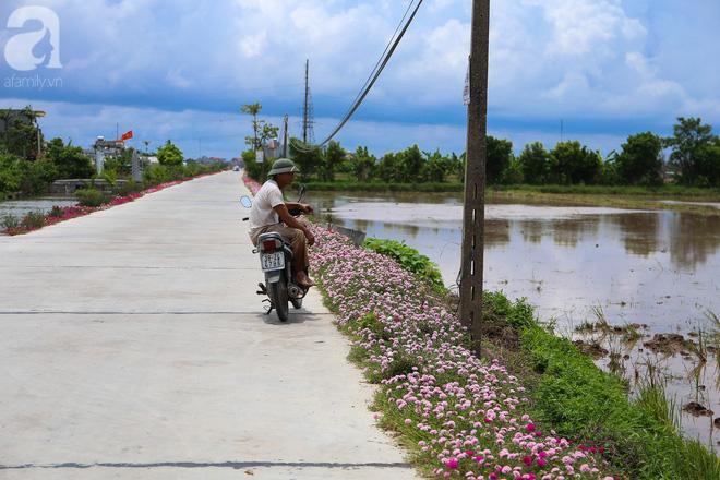Đẹp ngỡ ngàng những con đường làng rực rỡ màu hoa - Ảnh 4.