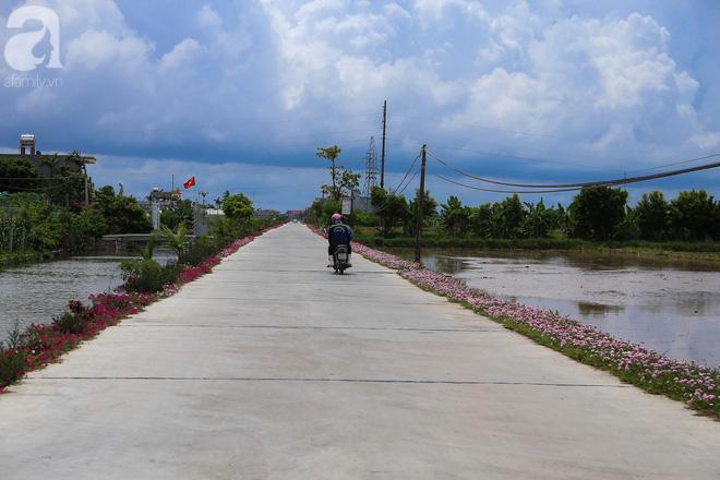 Đẹp ngỡ ngàng những con đường làng rực rỡ màu hoa - Ảnh 3.