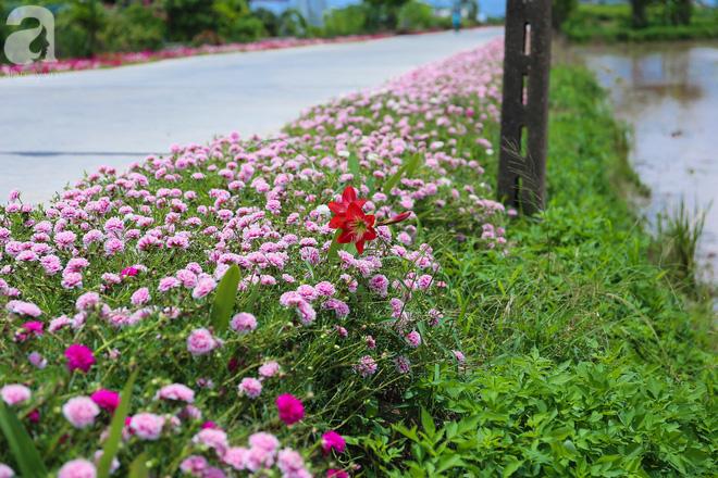 Đẹp ngỡ ngàng những con đường làng rực rỡ màu hoa - Ảnh 2.