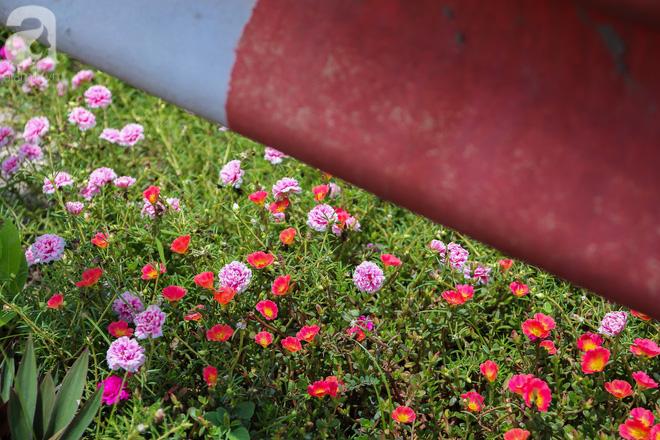 Đẹp ngỡ ngàng những con đường làng rực rỡ màu hoa - Ảnh 1.