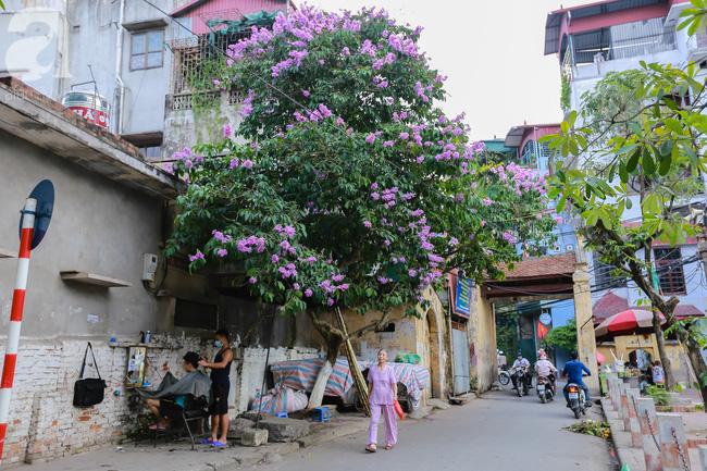 Sắc tím hoa bằng lăng khiến Hà Nội thơ mộng hơn giữa mùa hạ cháy - Ảnh 12.