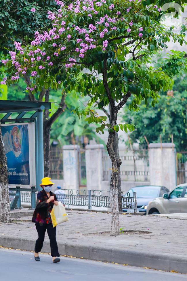 Sắc tím hoa bằng lăng khiến Hà Nội thơ mộng hơn giữa mùa hạ cháy - Ảnh 14.