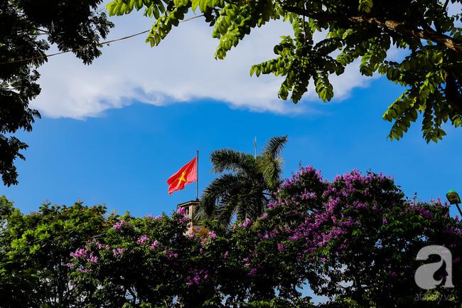 Sắc tím hoa bằng lăng khiến Hà Nội thơ mộng hơn giữa mùa hạ cháy - Ảnh 6.